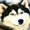 Аватар для Данил Мотолыщенко
